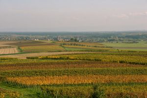 colorful vineyards by archaeopteryx-stocks