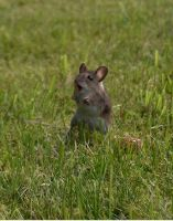 Surprised Mousie by SolStock