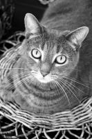 Louie in Grayscale by like-a-seahorse