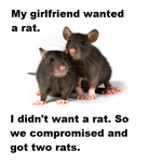 Rats by lexiepoo15
