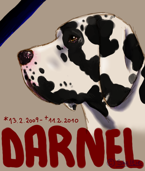 RIP Darnel, the Great Dane Pup by Shel-chan