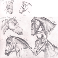 Horse Practice #4 (Heads) by Graboiidz