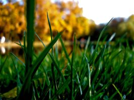 green in Fall by flocska