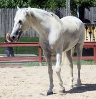 Andalusian 15 by roar-shack-stock