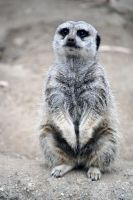 Lormet_Zoo-Animals-0030 by Lormet-Images