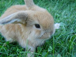 Bentley the Bunny by julie-jeanette1123