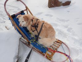 Capper- Mushing in style by Daydallas