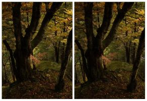 3D.forest - crossview by yatu-ex