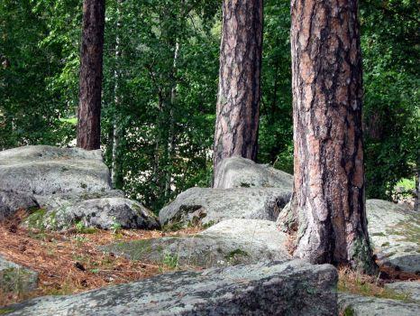 Trees and stones by barsovslava