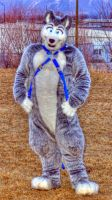Damon Husky - Harness - HDR by LycanDID