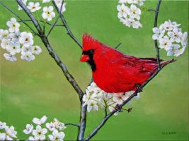 Red Cardinal by AcridMonkry