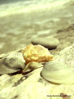 Seashells by blackpolkadotts