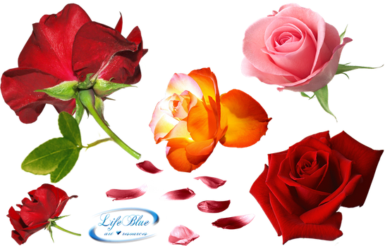 Roses everywhere - PNG by lifeblue