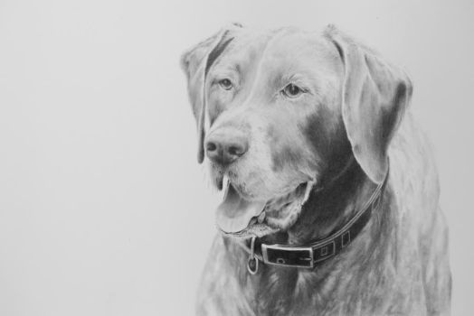 Dog drawing by stenolemus