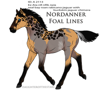 A2113 foal design by AhernStables