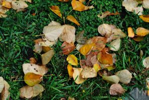 Fallen leaves, Fallen leaves on the ground by Zaralith