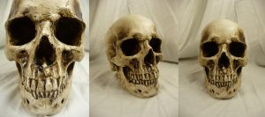 Human Skull Stock II by Melyssah6-Stock