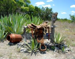 Ageless as Agaves by rvotaw