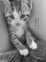 my, what blue eyes you have! by nothingbutsoul