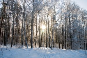 WInter foret 2 by marphey