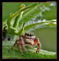 Little Jumper, Big Eyes by boron