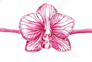 Watercolor Orchid by Jill92