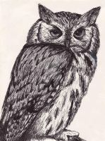 Pen and Ink Owl by Azymmuth