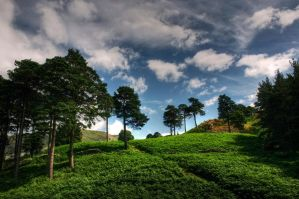 Keldas - by scotto
