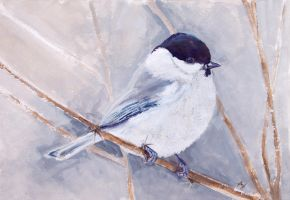 Chickadee by h-i-l-e-x
