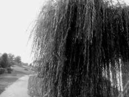 Weeping Willow by mahsunny