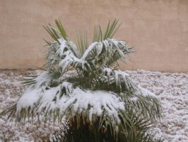 Snowy palm tree by Doodeler