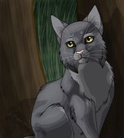Graystripe by Ebonycloud-Graphics