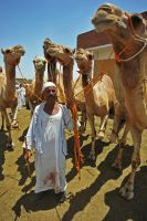 Camel Master, Cairo, Egypt by fourthwall