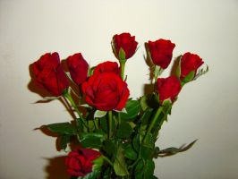 Roses by G-Unit23Stock
