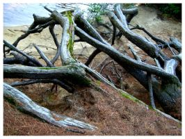 Roots Exposed II by Fallensbane