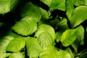 Green Leaves by Bluebuterfly72