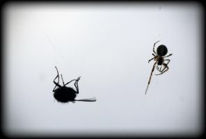 Said the Spider to the Fly by 100-days