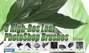 8 High Resolution Leaf Photoshop Brushes by designerfied