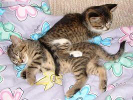 2 Snuggling Kittens v2 by FantasyStock