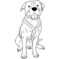 American Pit Bull Terrier Lines by Wolfs-Hybrid