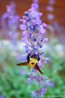 The Flower and The Bee by adinik