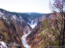 Lower Falls Yellowstone National Park Wyoming by MSchmidtPhotography