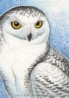 Snowy owl ACEO by mirroreyesserval