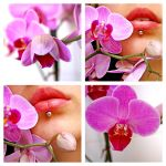 PiNKiTUDE.. by OrchidFeehan