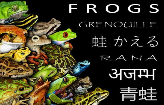 Prototype for Frog Poster by rogerdhall