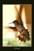 Hummingbird Salute by chromosphere