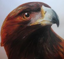 Golden Eagle by Catherine1992