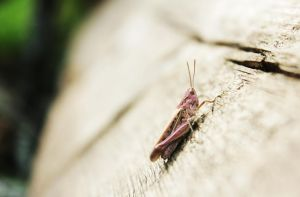grasshopper by TinaGrey