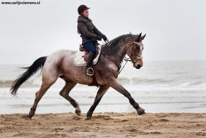 Beautiful mare at the beach by carlinusje