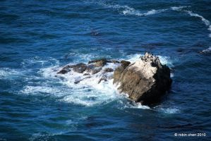Cormorant Rock by meihua